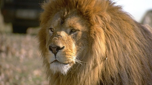 Things to Do in Hamilton - African Lion Safari